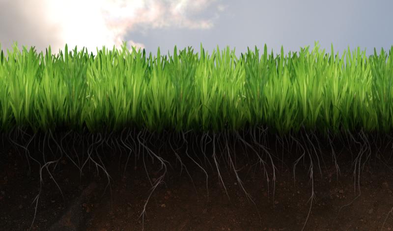 гумус для почвы в земледелии