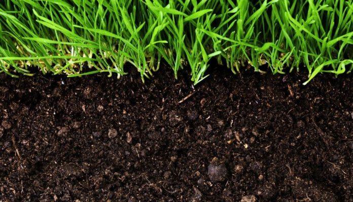 гумус для почвы